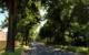 Baumpflegefonds für Bayreuth: Auch die Bäume wie hier in der Markgrafenallee würden von der Bewässerung profitieren. Bild. Jürgen Lenkeit.