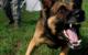 Ein Hund hat in Hof einen Radfahrer gebissen. Er musste mit einer blutenden Wunde ins Krankenhaus. Symbolfoto: Pixabay