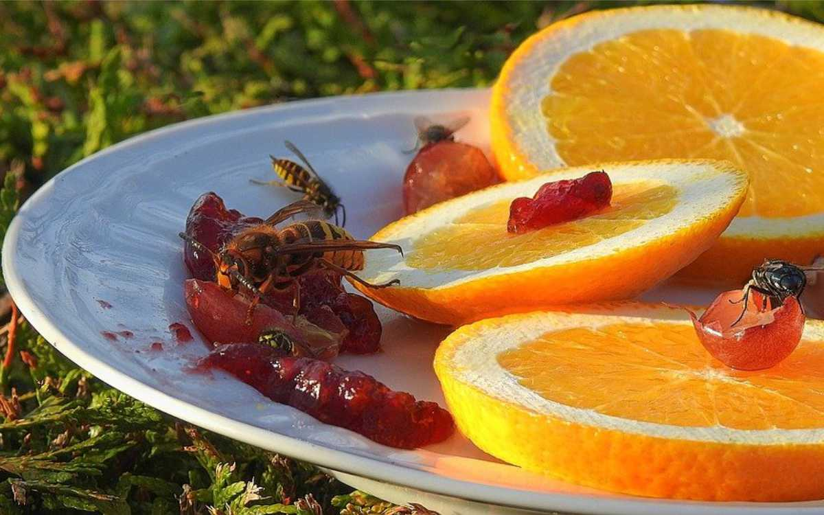 Störende Wespen beim Kaffee. Symbolbild: Pixabay