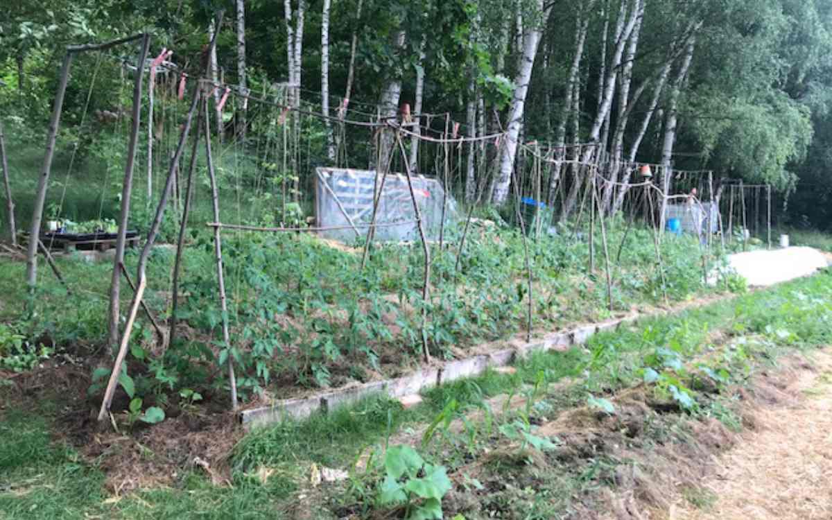 Viva Patata - Diverses Gemüseangebot in Goldkronach im Landkreis Bayreuth. Bild: Viva Patata/Karsten Weyandt