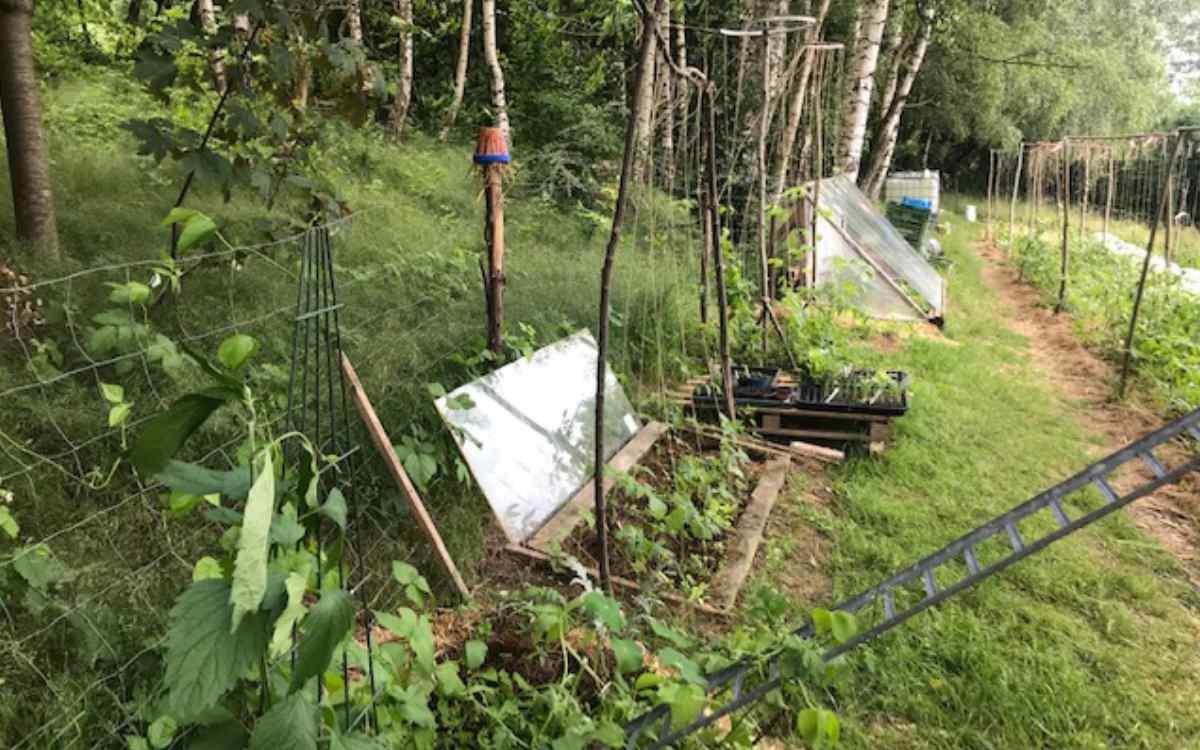Bei Viva Patata wird alles in Eigenarbeit angebaut. Bild: Viva Patata/Karsten Weyandt