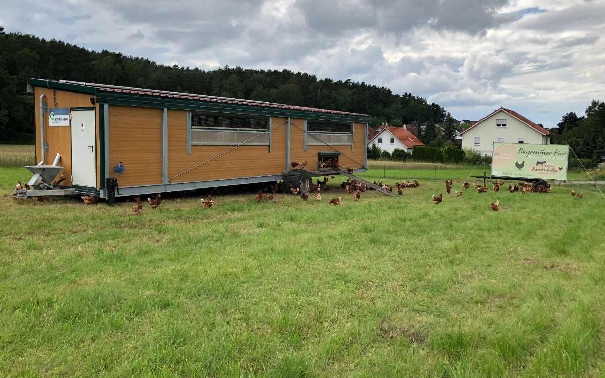 Die Hühner vom Hof Bauernhöfen sollen stets viel Platz für Auslauf bekommen. Bild: Michael Kind