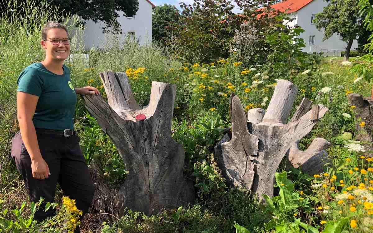 Projektmitarbeiterin Franzi Wagner bei den Natternkopf-Mauerbienen im Hortus Hammerstatt - einem Projekt der Summer in Bayreuth. Bild: Michael Kind