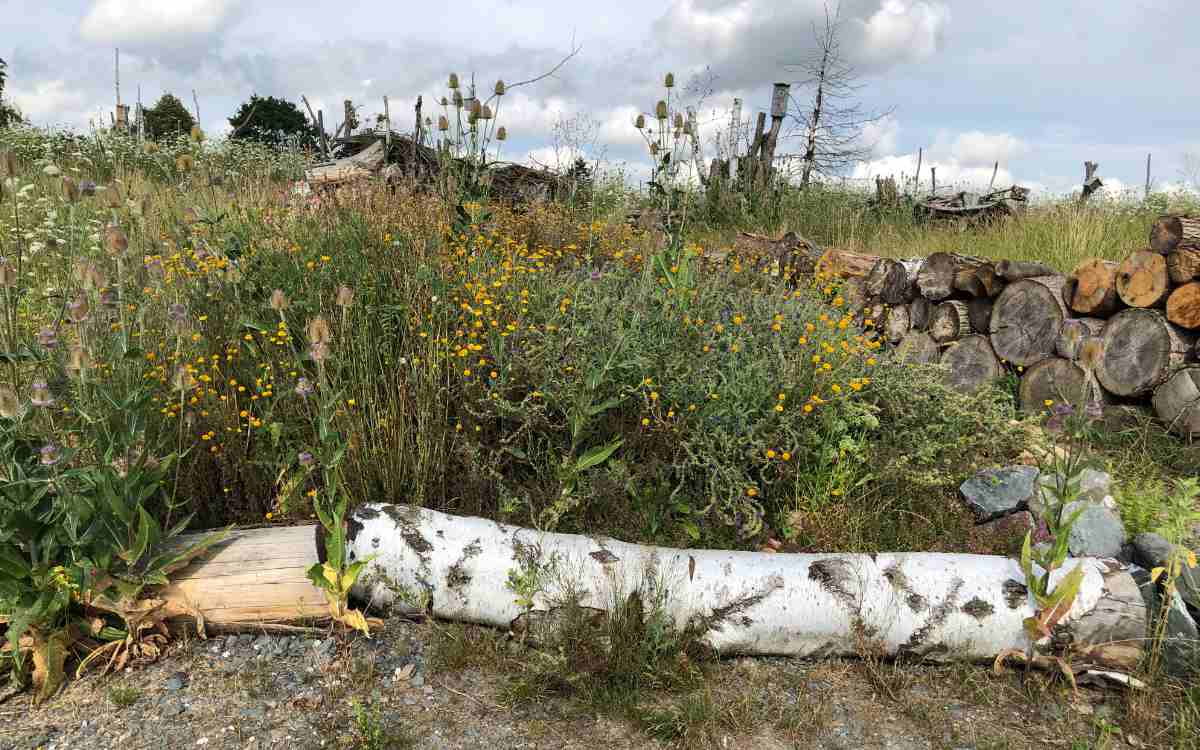 Begrenzung mit Totholz und Steinen - hier im Naturgarten auf dem ehemaligen Gelände der Landesgartenanschau. Bild: Michael Kind