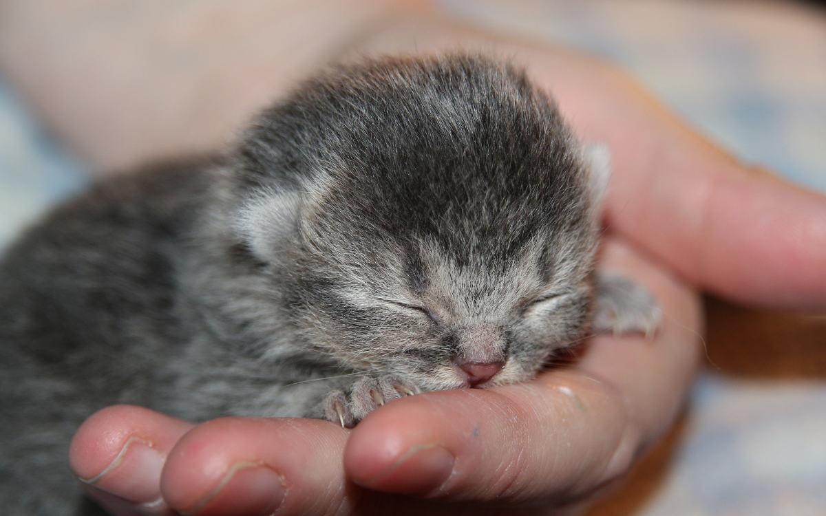 In der Nähe von Unterfranken im Landkreis Fulda wurden fünf tote Katzenbabys gefunden. Symbolbild: Pixabay
