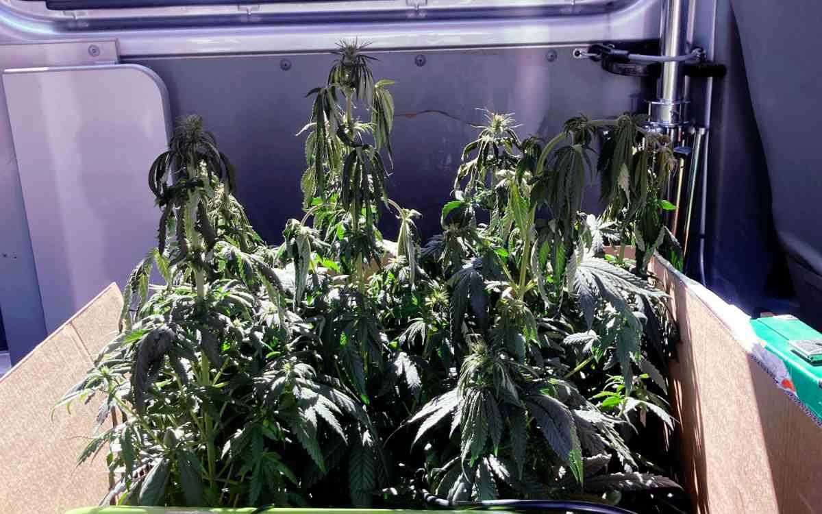 In einer Wohnung in Himmelkron hat es gebrannt. Bei der anschließenden Begehung fanden Polizisten Marihuana-Pflanzen. Bild: Polizei Stadtsteinach