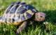In Eckersdorf wurden zwei Schildkröten aus einem Garten gestohlen. Symbolfoto: pixabay