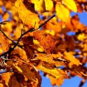 Wetter in Bayreuth: Am Wochenende wird es sonnig. Ab Sonntagabend dann ungemütlicher. Symbolbild: pixabay
