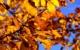Der Goldene Oktober kommt noch einmal nach Bayern. Ab Mitte der Woche droht allerdings der Temperatursturz. Symbolbild: pixabay