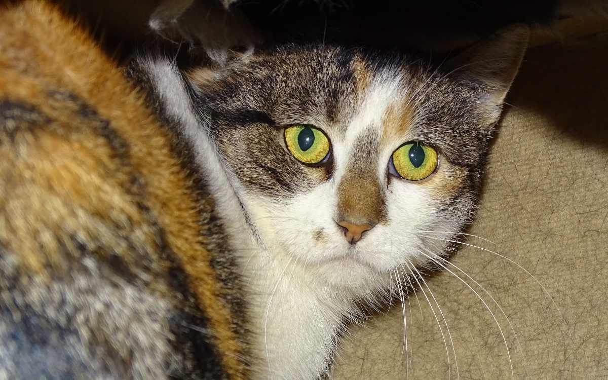 Auch Blanka möchte natürlich ihren Freigang bei einem neuen Besitzer genießen. Bild: Tierheim Bayreuth