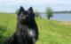 Ein Hund eines Polizisten hat in Muhr am See einen Vermissten gefunden - und womöglich das Leben gerettet. Foto: Polizei