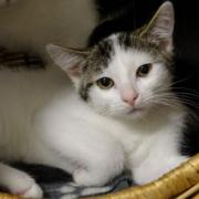 Josefine aus dem Tierheim Bayreuth - nur eines von vielen Katzenkindern, das auf ein neues Zuhause wartet. Bild: Tierheim Bayreuth