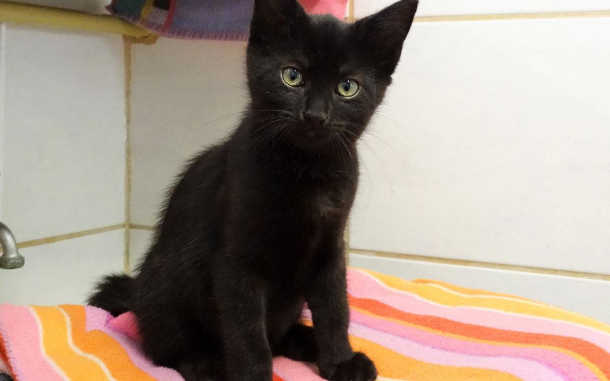 Genauso schwarz und genauso knuffig wie Amigo - auch Kiki würde sich über einen neuen Besitzer freuen. Bild: Tierheim Bayreuth