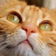 Nach einem Brand in Bayreuth konnte die Feuerwehr eine Katze retten. Symbolbild: Pixabay