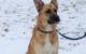 Labrador-Schäferhund Simba aus dem Tierheim Bayreuth würde sich sehr über ein neues Herrchen oder Frauchen freuen. Bild: Tierheim Bayreuth