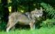 Die CSU-Fraktion im Bayreuther Kreistag will sachlich und vernünftig über Wölfe sprechen - und sie notfalls jagen und erschießen lassen. Symbolbild: Pixabay