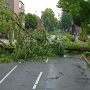 Gerade im Landkreis Bayreuth sind aufgrund der starken Sturmböen schon am Vormittag mehrere Bäume umgekippt. Symbolbild: Pixabay